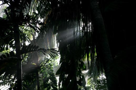 Promienie Miłosierdzia Bożego w dżungli - foto