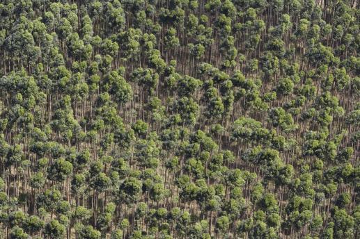 Chrońmy Amazonię przed gospodarczym i ideologicznym kolonializmem - foto