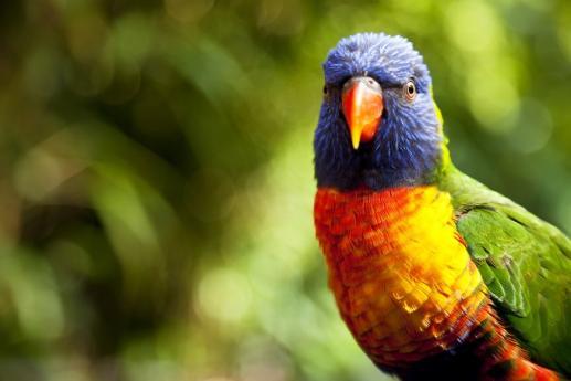 Kolorowe ptaszysko - foto