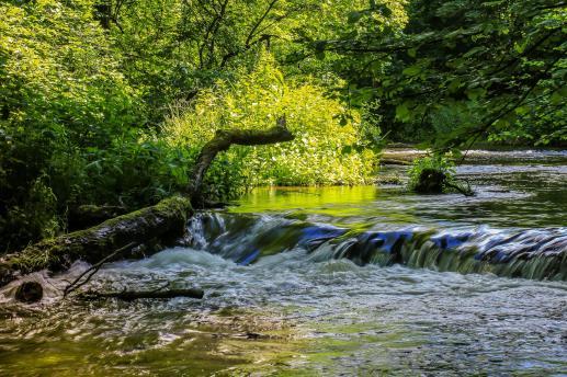 Ekologia czy ekologizm? - foto