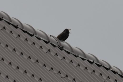 Na dachy - foto