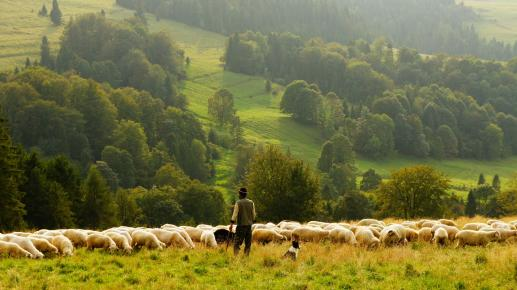 Nie jesteście urzędnikami lub politykami, ale pasterzami - foto