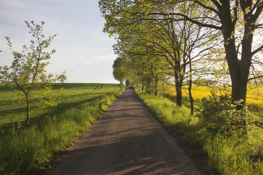 Droga miejscem radosnego głoszenia Ewangelii - foto