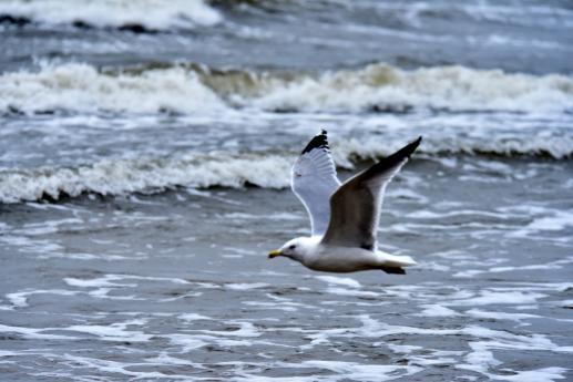 Symbole Ducha Świętego. Woda - foto