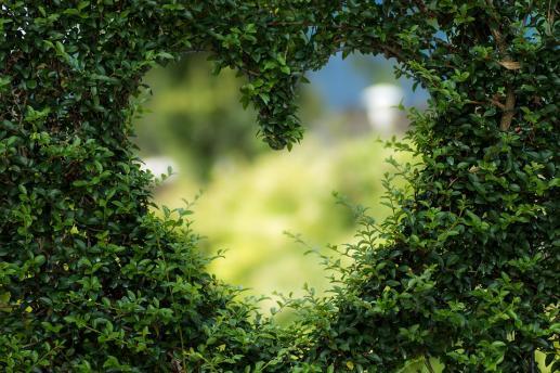 Zobaczyć serce - foto